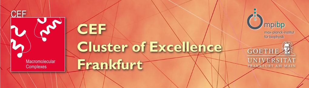 Cluster of Excellence (CEF)
